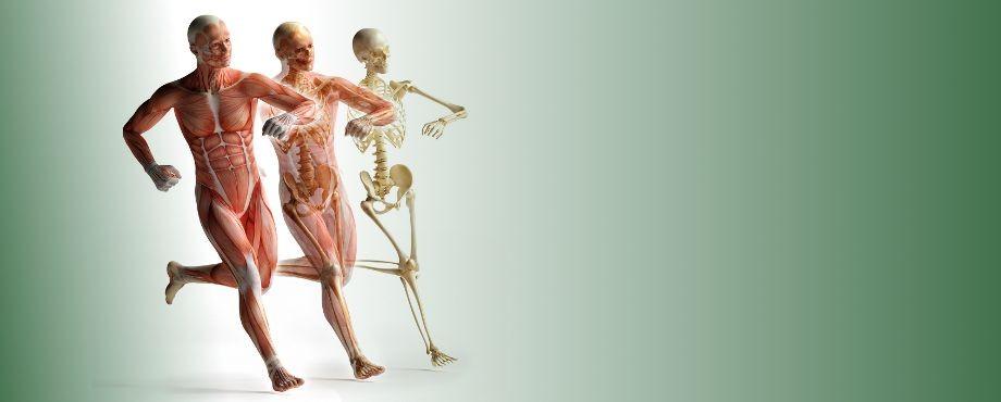 Gesundheitskurse bei der Medical Fitness Academy
