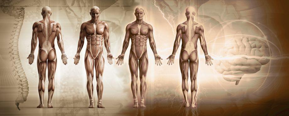 Einführung -Medical Fitness Coach für Prävention bei der Medical Fitness Academy
